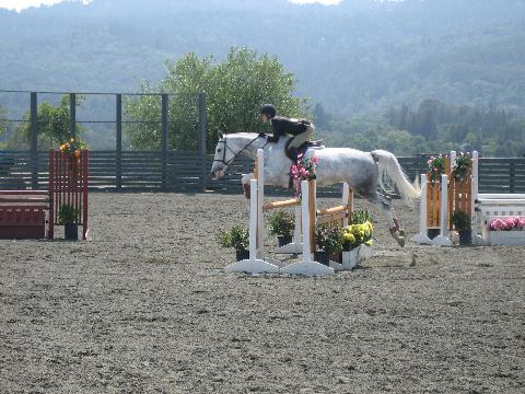 grey_jump_oxer