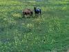 grassy_meadow
